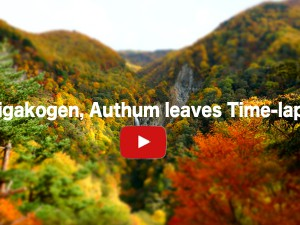 Shigakoge Authum leaves time-lapse