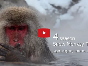 4seasons, Snow Monkey Town「山ノ内町」